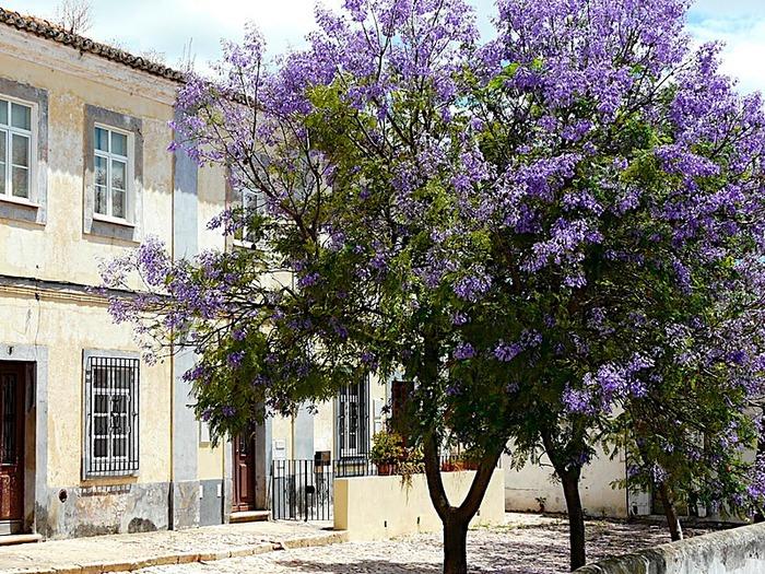 Португалия - Алгарве 32808