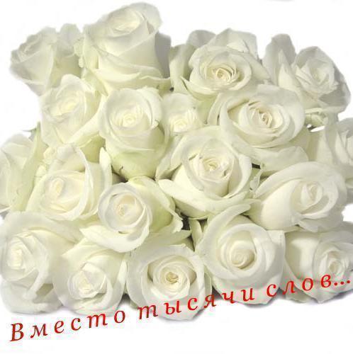 51068191_vmesto_tuysyachi_slov (498x500, 29 Kb)
