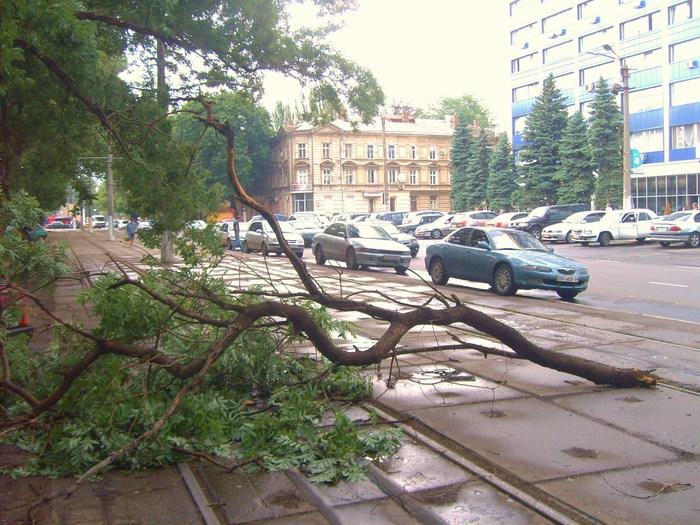 одесса, плохая погода, буря одесса, ливень, упало дерево
