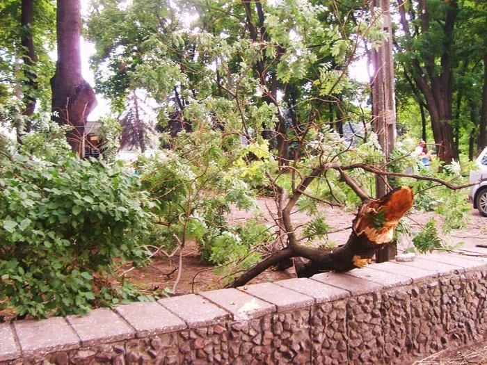 , одесса, плохая погода. буря одесса. ливень, упало дерево