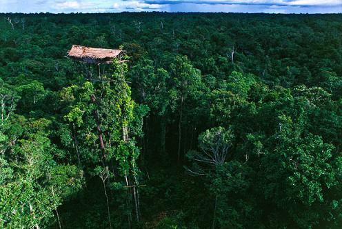 короваи индонезия дом на деревьях на высоте 50 метров