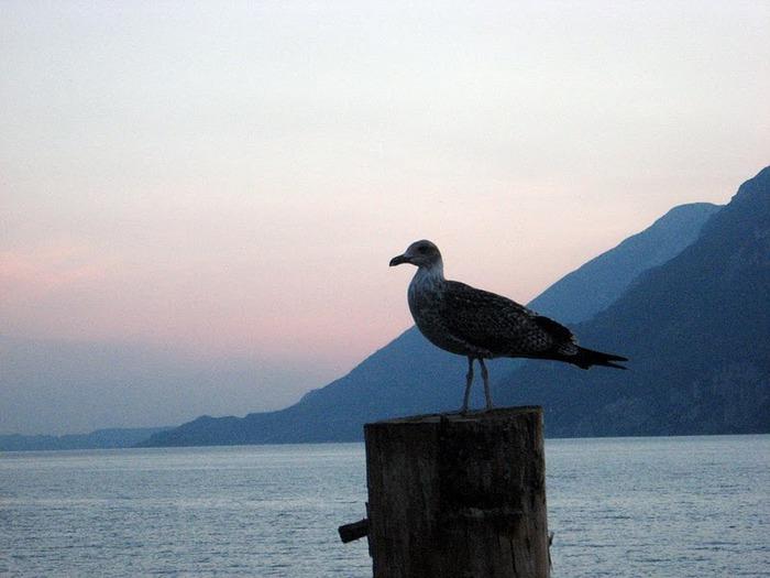 Озеро Гарда – cапфир в ожерелье озер Италии. 60112