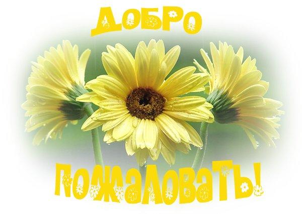 61425553_1ad99d3dea71.jpg