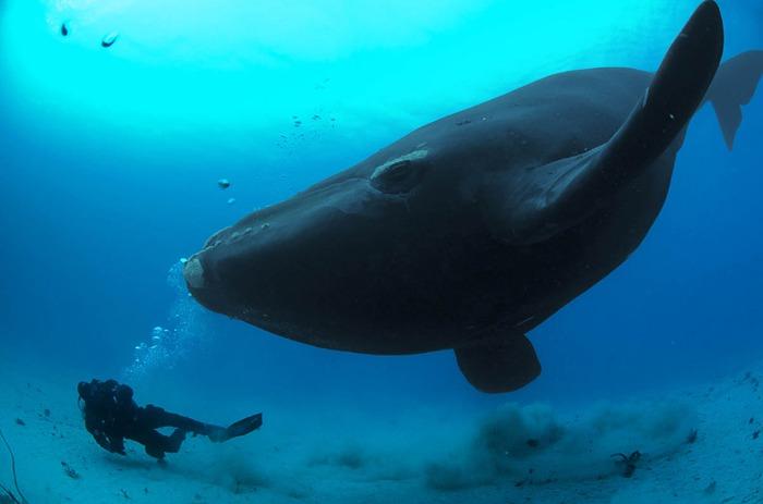 синий кит брайна скерри