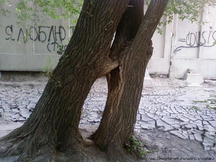 Секс на деревия фото 68-285