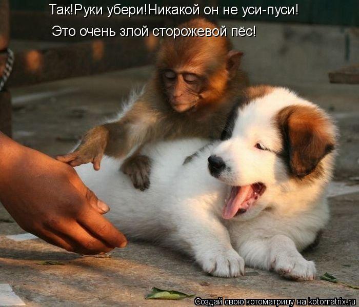Позитив спасет мир=)