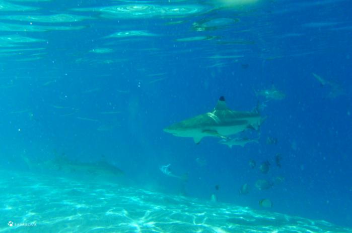 Таити – райские острова!