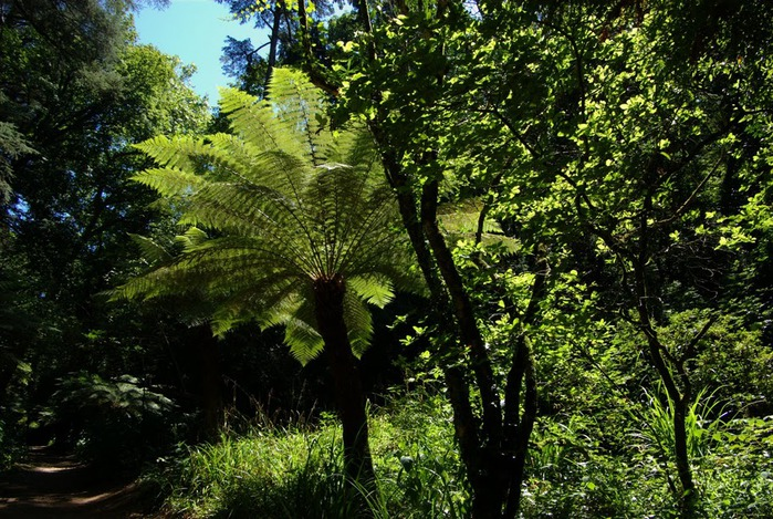 Дворец удовольствий в окружении леса Буссакo 66629