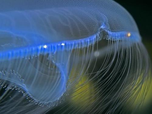 Загадочные медузы
