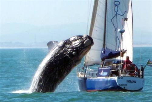 кит прыгает на яхту