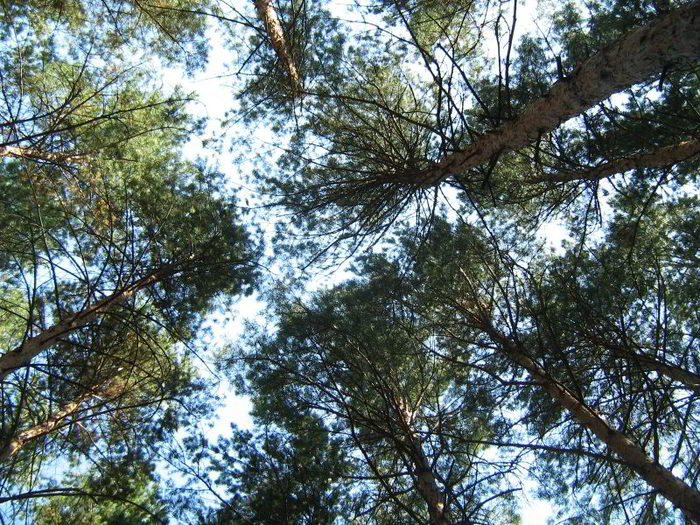 Лес. пансионат бывший им.Орджоникидзе
