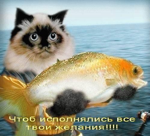 http://img0.liveinternet.ru/images/attach/c/1//61/887/61887656_ruybak.jpg