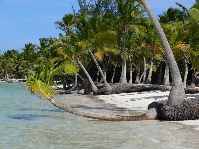 Доминикана - тропический рай. 20801