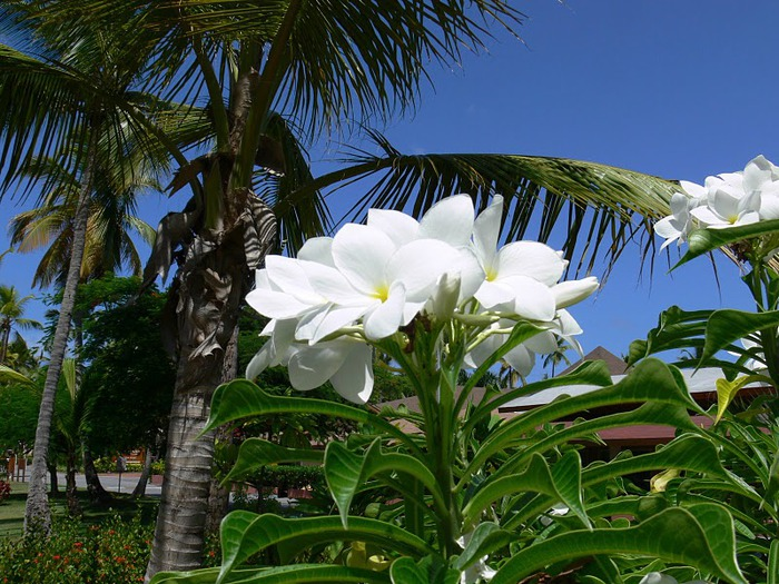 Доминикана - тропический рай. 92364