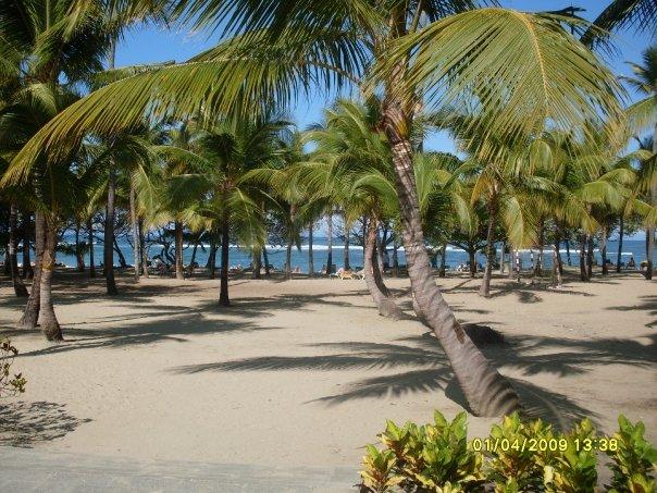 Доминикана - тропический рай. 85176