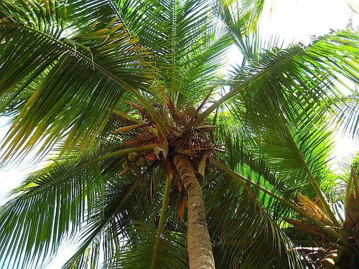 Доминикана - тропический рай. 65240