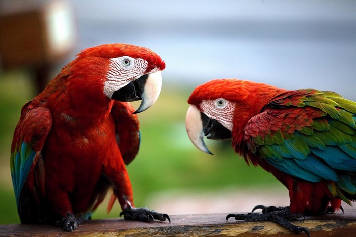Доминикана - тропический рай. 22106