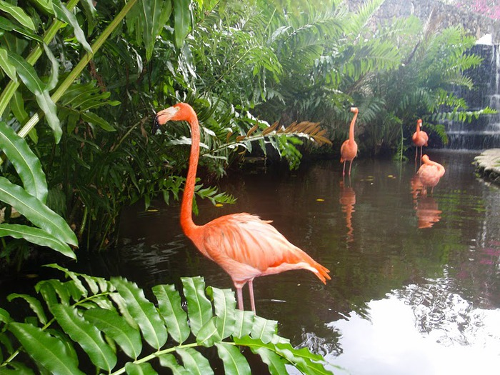 Доминикана - тропический рай. 39901