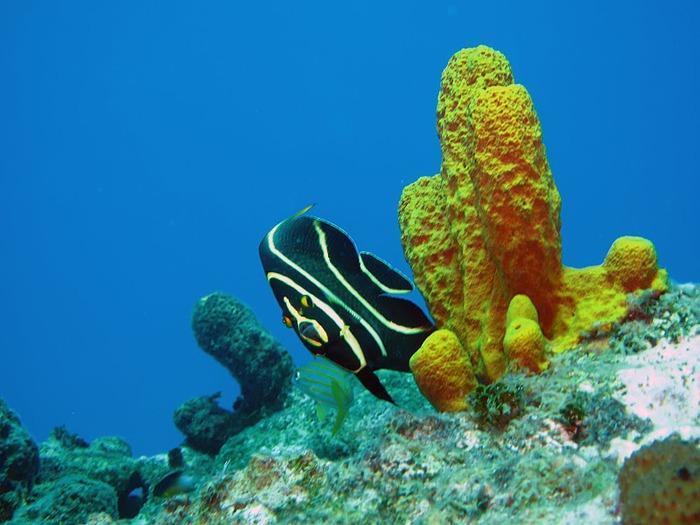 Доминикана - тропический рай. 42781