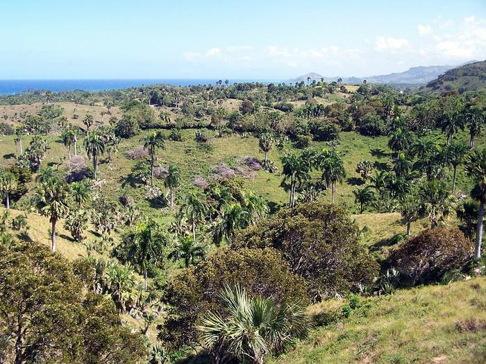 Доминикана - тропический рай. 69239