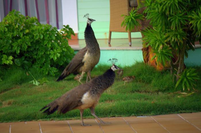 Доминикана - тропический рай. 81100