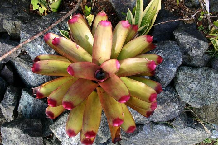Доминикана - тропический рай. 37377