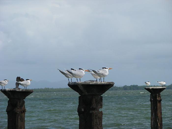 Доминикана - тропический рай. 60843