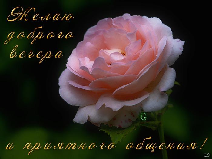 http://img0.liveinternet.ru/images/attach/c/1//62/182/62182788_rozochka.jpg
