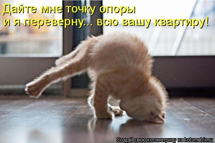 @темы: фото кошек, прикольные...