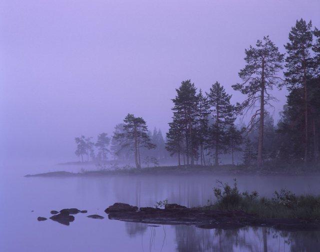 сиреневый туман похож на обман, стакан, диван