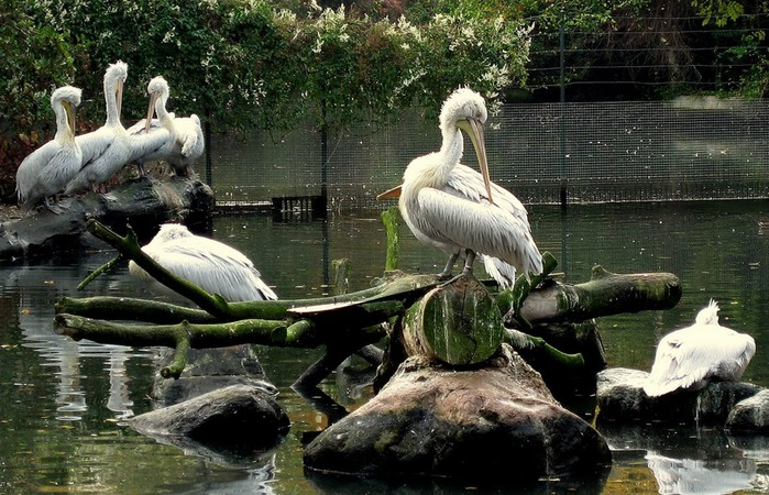 Зоологический сад в Лейпциге (Zoologischer Garten, Leipzig ) 37286