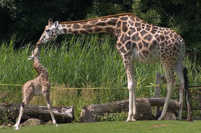 Зоологический сад в Лейпциге (Zoologischer Garten, Leipzig ) 93105