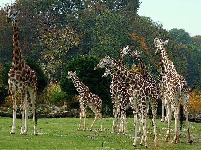 Зоологический сад в Лейпциге (Zoologischer Garten, Leipzig ) 94246