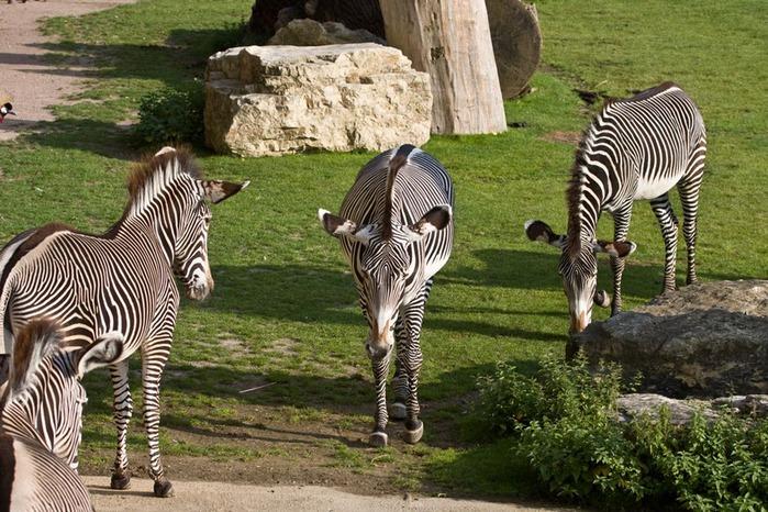 Зоологический сад в Лейпциге (Zoologischer Garten, Leipzig ) 86537