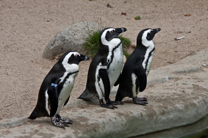 Зоологический сад в Лейпциге (Zoologischer Garten, Leipzig ) 24063