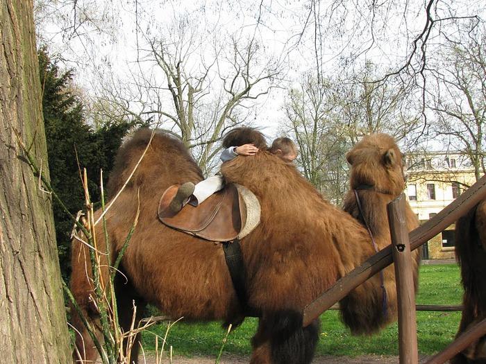 Зоологический сад в Лейпциге (Zoologischer Garten, Leipzig ) 73163