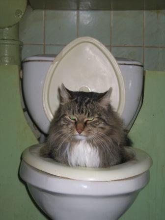 кот в унитазе очень смешная фотка