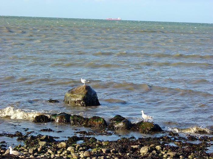 Остров Фемарн – бальзам для души 16095