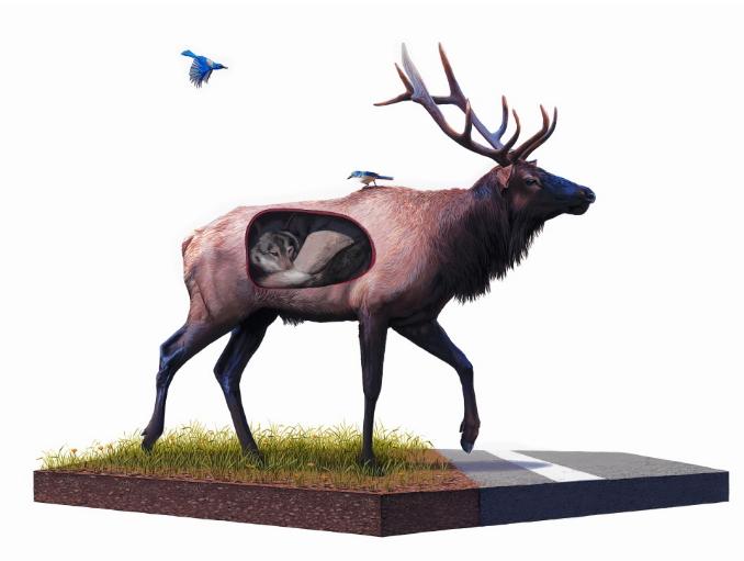 Жизнь в разрезе от художника Джоша Кейеса (Josh Keyes)