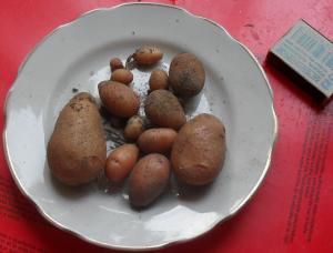 (300x228, 159Kb)Урожай картофеля