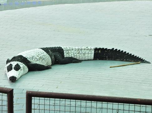 гибрид панды и крокодила выведен художниками китая