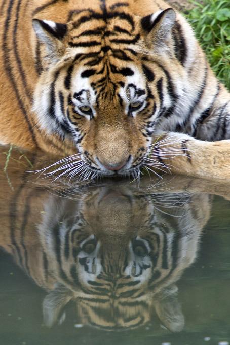 Жара в зоопарках   фото спасающихся животных