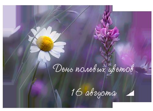http://img0.liveinternet.ru/images/attach/c/1//62/765/62765396_1281910623_16avgusta2010.png