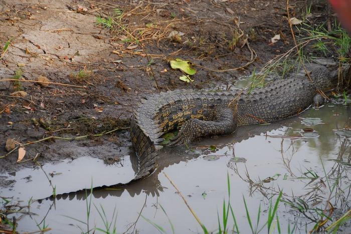 Национальный парк Какаду (Австралия) 66473