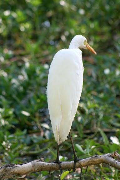 Национальный парк Какаду (Австралия) 15209