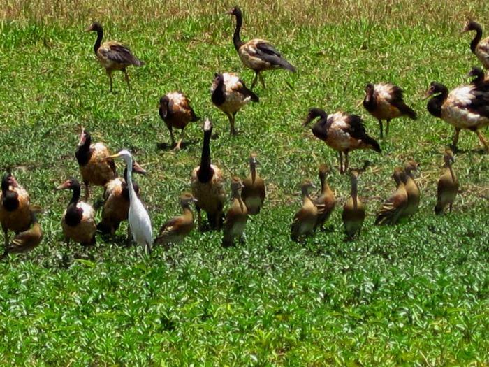 Национальный парк Какаду (Австралия) 55338