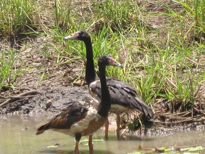 Национальный парк Какаду (Австралия) 55785