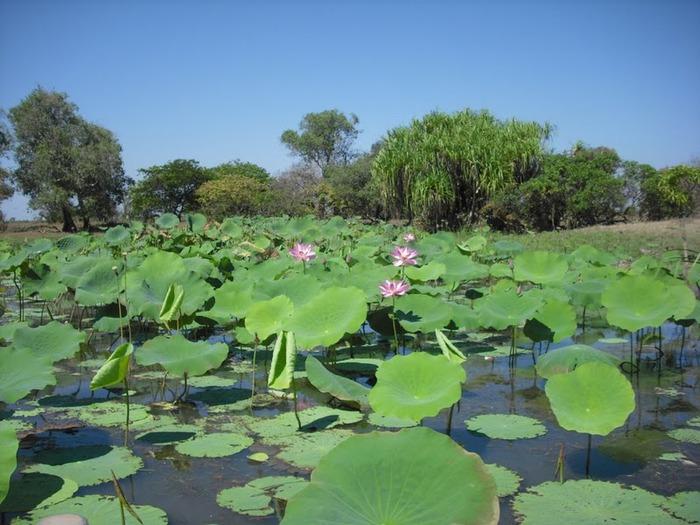 Национальный парк Какаду (Австралия) 71560