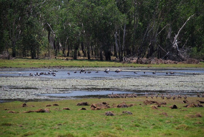 Национальный парк Какаду (Австралия) 62774