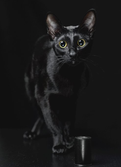 1262605387_black_cat_7_koteiko (395x545, 62 Kb)